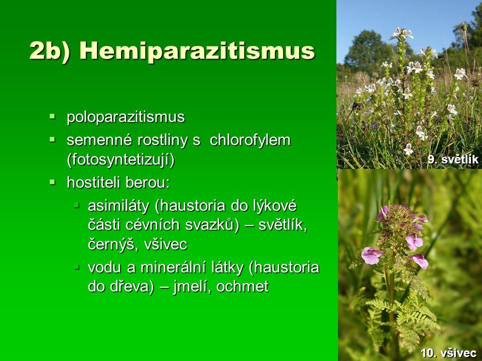2b) Hemiparazitismus poloparazitismus