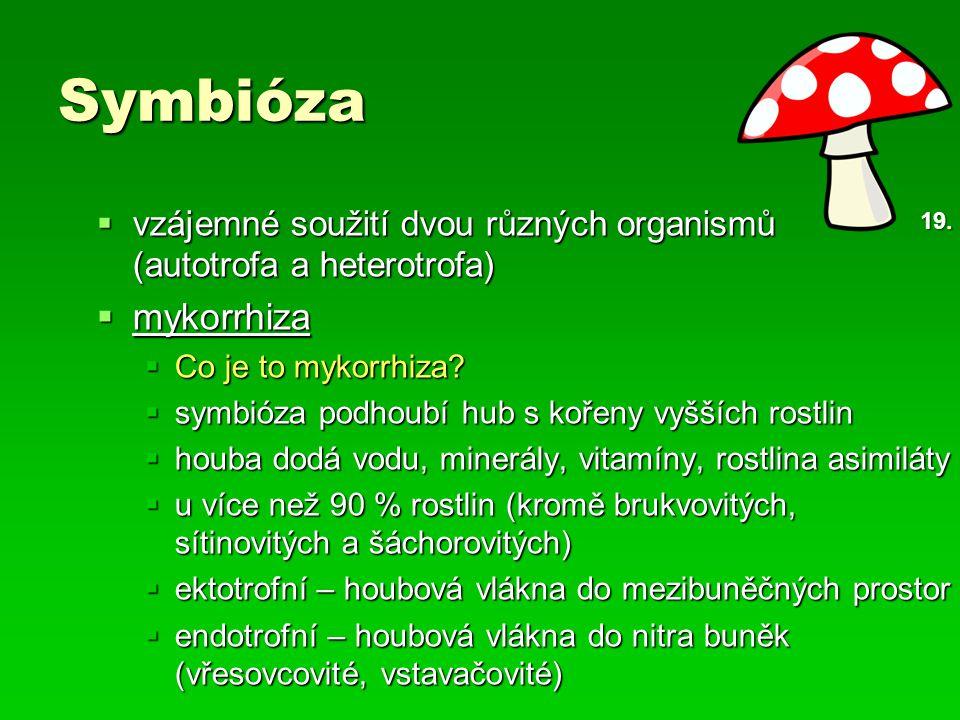 Symbióza vzájemné soužití dvou různých organismů (autotrofa a heterotrofa) mykorrhiza. Co je to mykorrhiza