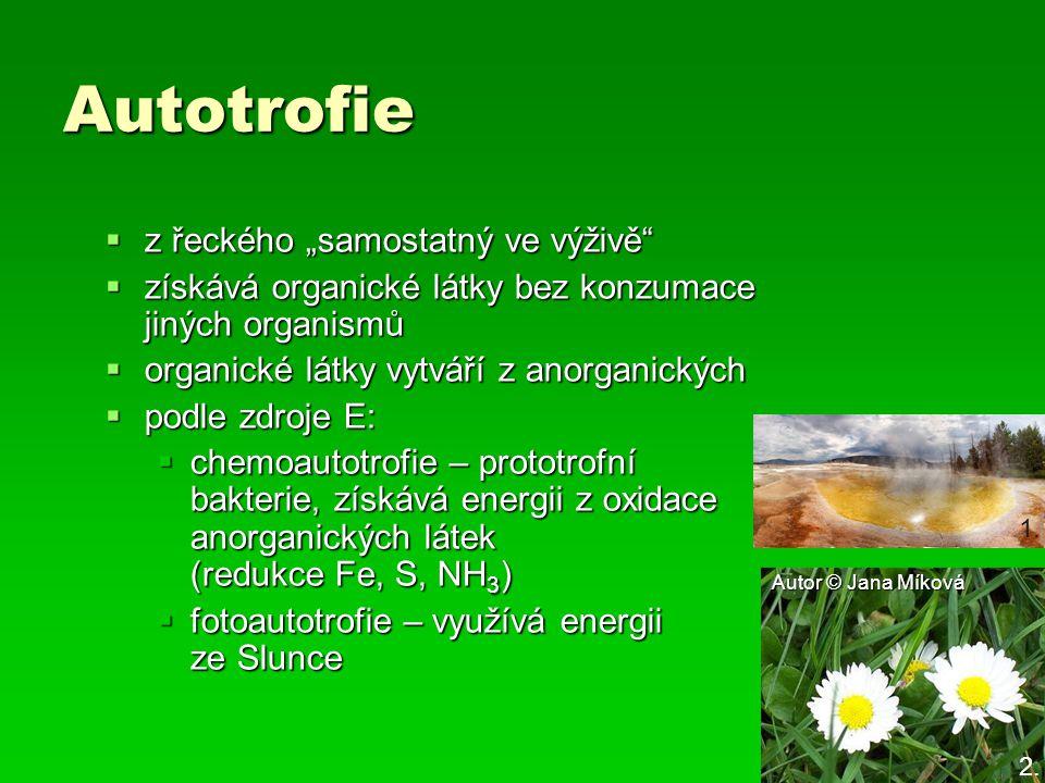"""Autotrofie z řeckého """"samostatný ve výživě"""