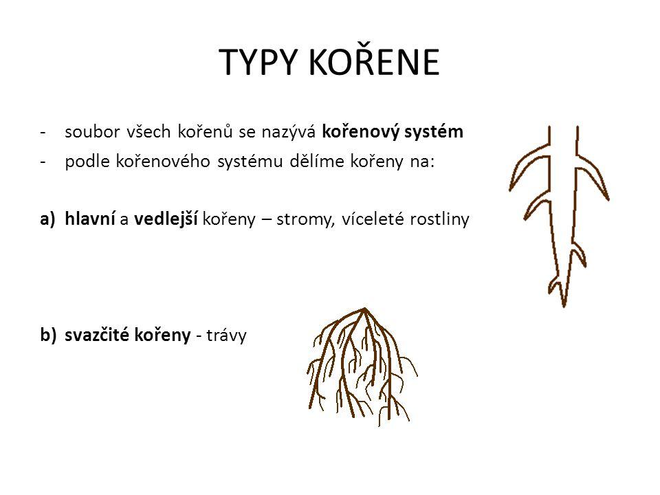 TYPY KOŘENE soubor všech kořenů se nazývá kořenový systém