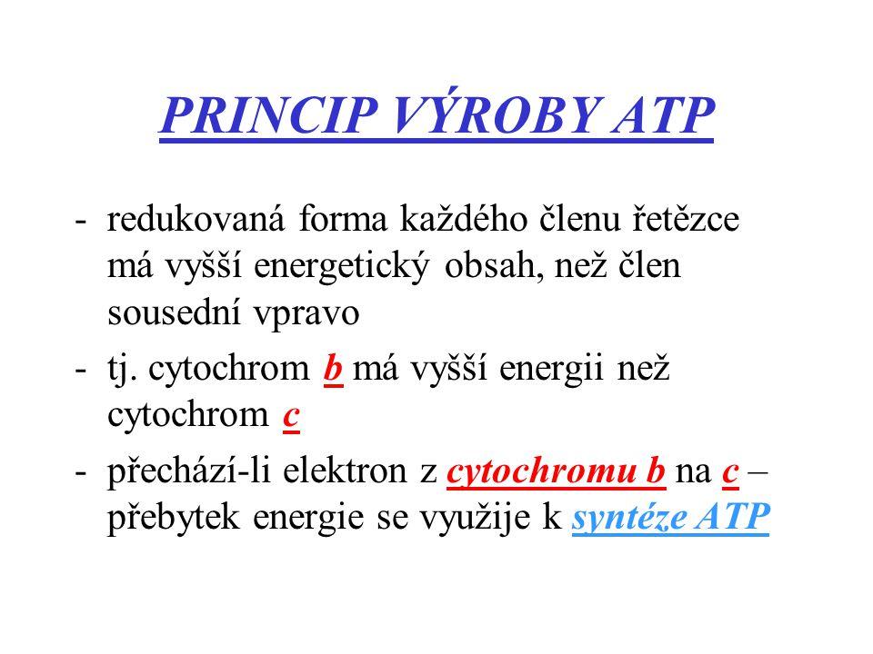 PRINCIP VÝROBY ATP redukovaná forma každého členu řetězce má vyšší energetický obsah, než člen sousední vpravo.
