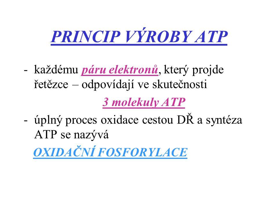 PRINCIP VÝROBY ATP každému páru elektronů, který projde řetězce – odpovídají ve skutečnosti. 3 molekuly ATP.