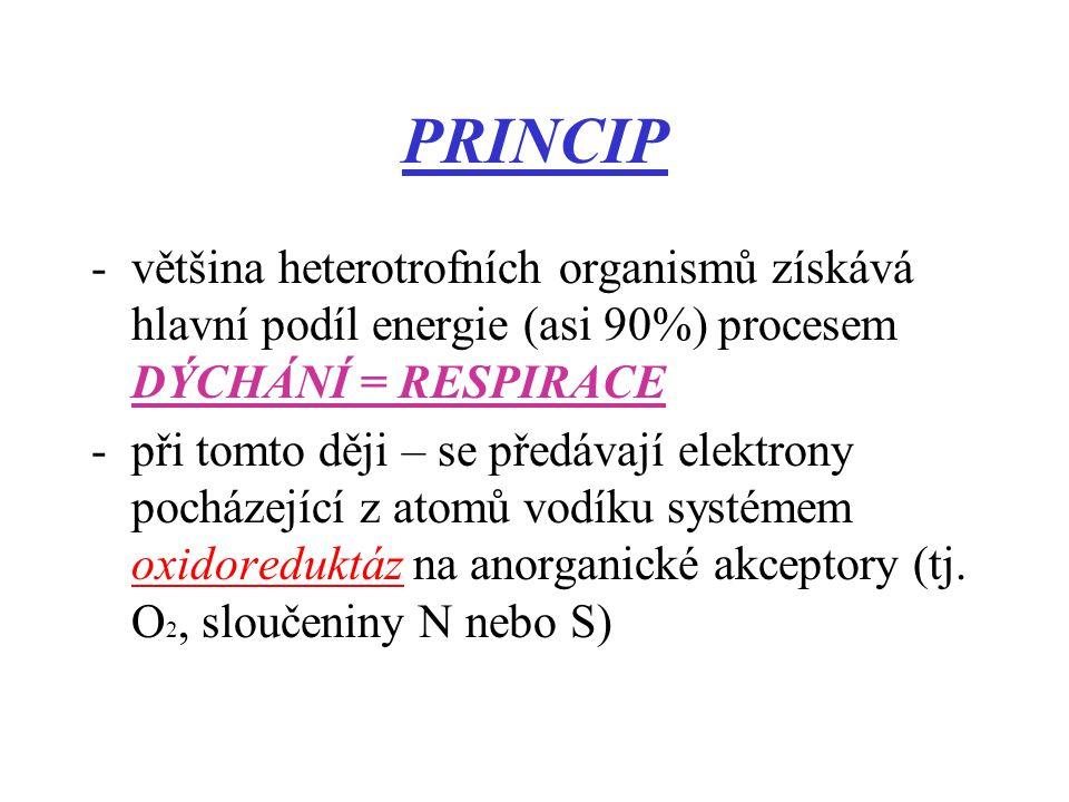 PRINCIP většina heterotrofních organismů získává hlavní podíl energie (asi 90%) procesem DÝCHÁNÍ = RESPIRACE.