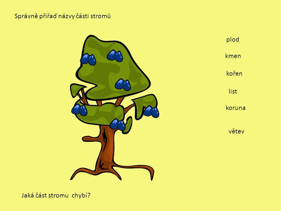 Správně přiřaď názvy části stromů