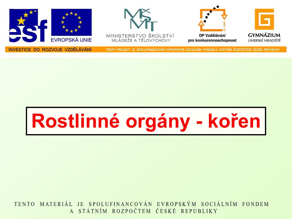 Rostlinné orgány - kořen