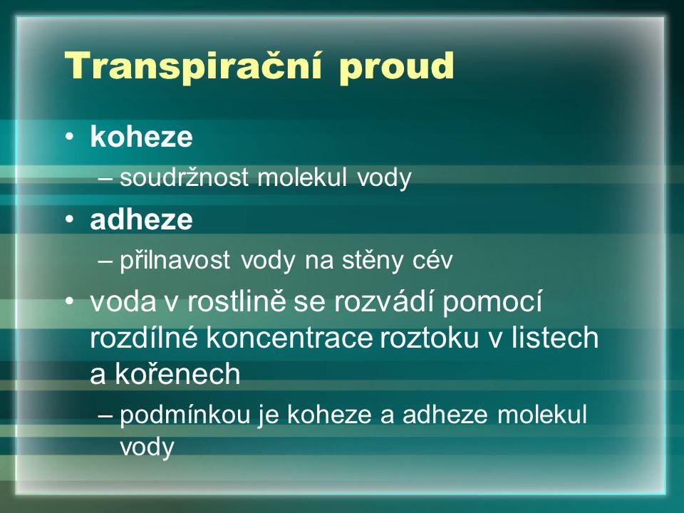 Transpirační proud koheze adheze