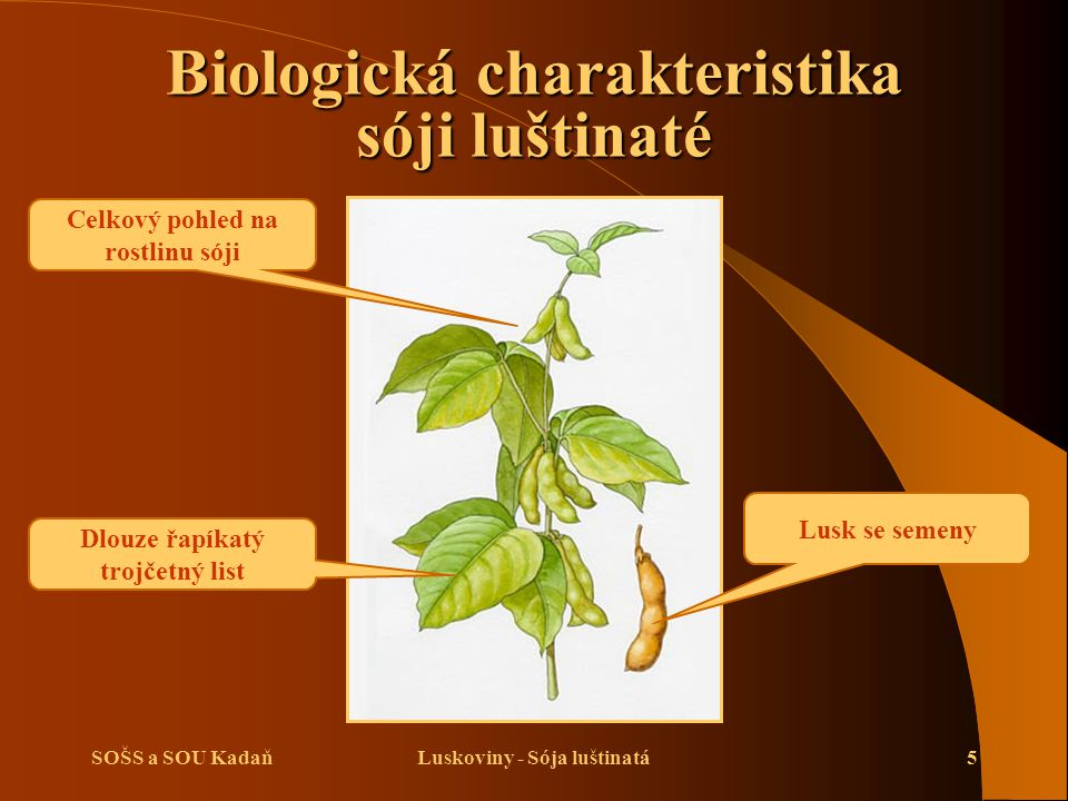 Biologická charakteristika sóji luštinaté
