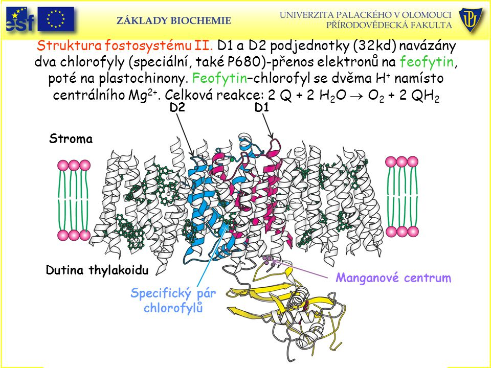 Struktura fostosystému II