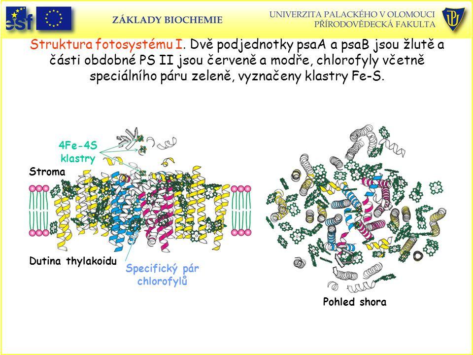 Struktura fotosystému I