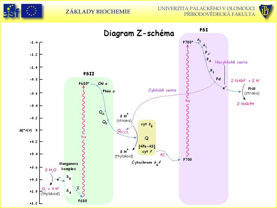 Diagram Z-schéma Z-schéma, diagram