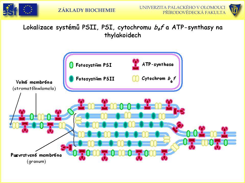 Lokalizace systémů PSII, PSI, cytochromu b6f a ATP-synthasy na thylakoidech