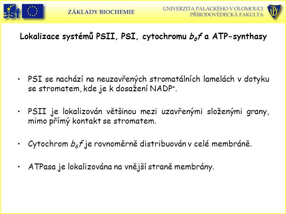 Lokalizace systémů PSII, PSI, cytochromu b6f a ATP-synthasy