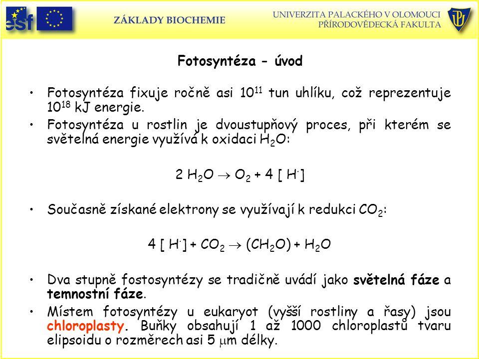 Současně získané elektrony se využívají k redukci CO2: