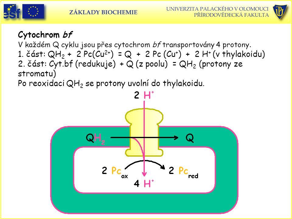 Cytochrom bf V každém Q cyklu jsou přes cytochrom bf transportovány 4 protony.