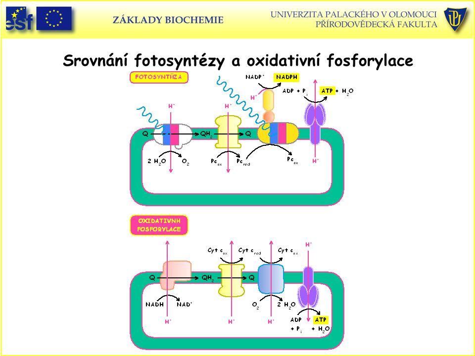 Srovnání fotosyntézy a oxidativní fosforylace