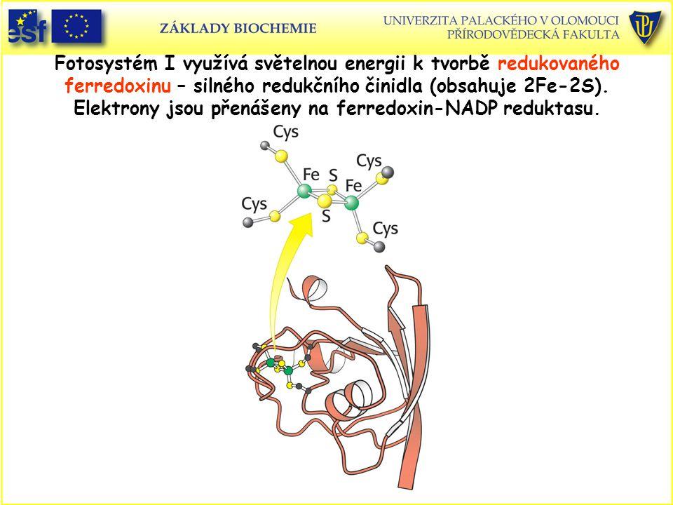 Fotosystém I využívá světelnou energii k tvorbě redukovaného ferredoxinu – silného redukčního činidla (obsahuje 2Fe-2S).