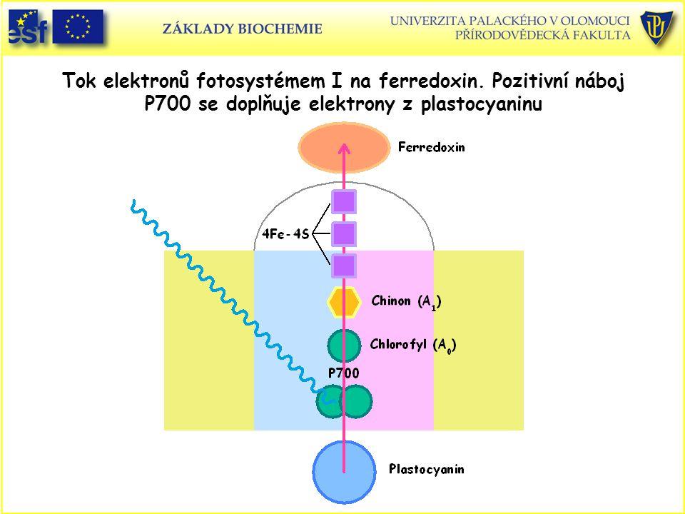 Tok elektronů fotosystémem I na ferredoxin