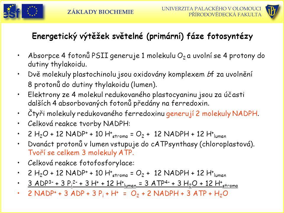 Energetický výtěžek světelné (primární) fáze fotosyntézy