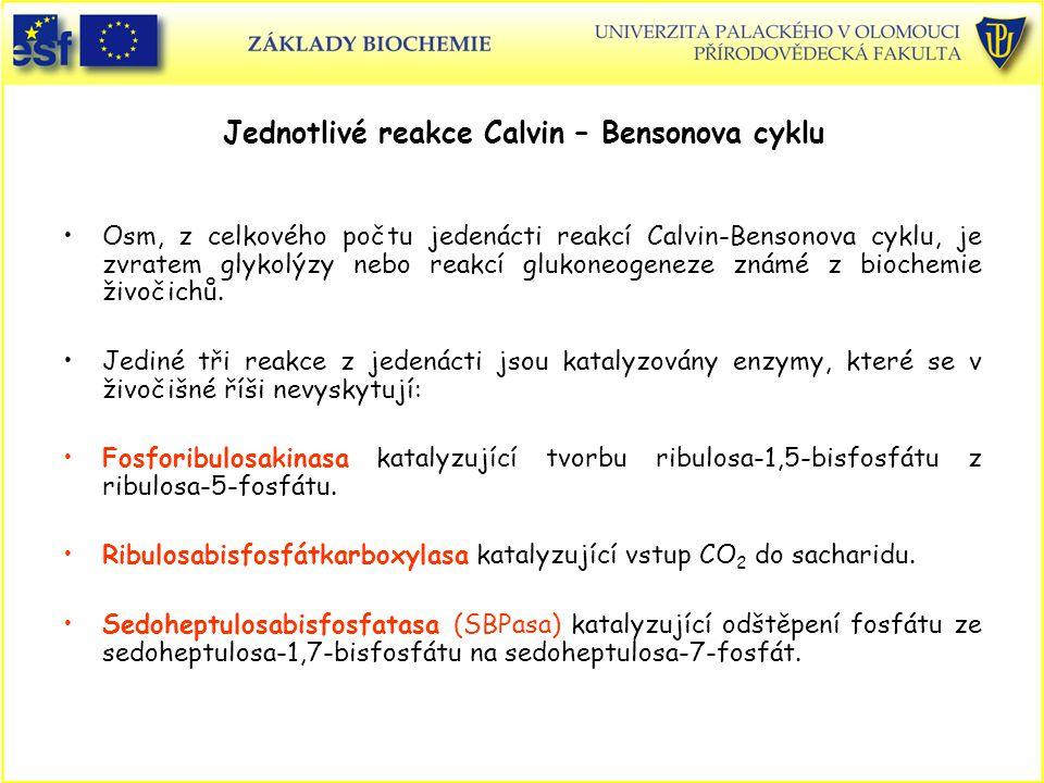 Jednotlivé reakce Calvin – Bensonova cyklu