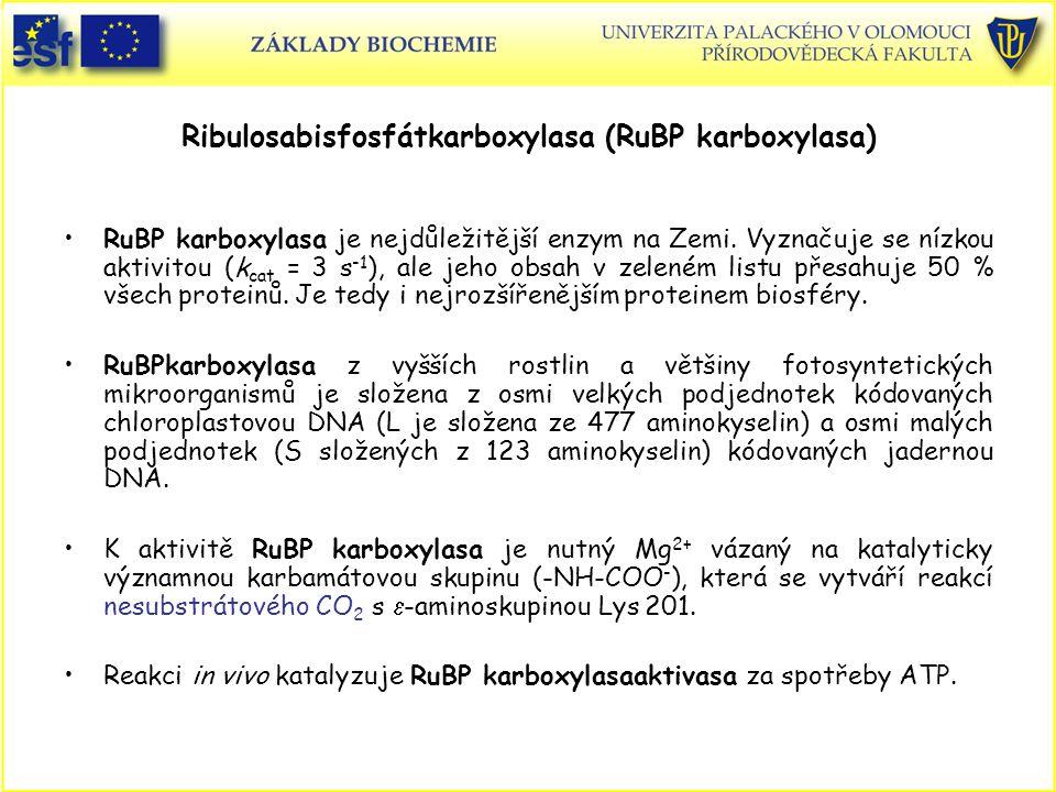 Ribulosabisfosfátkarboxylasa (RuBP karboxylasa)