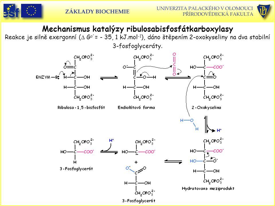 Mechanismus katalýzy ribulosabisfosfátkarboxylasy Reakce je silně exergonní (D Go´= - 35, 1 kJ.mol-1), dáno štěpením 2-oxokyseliny na dva stabilní 3-fosfoglyceráty.