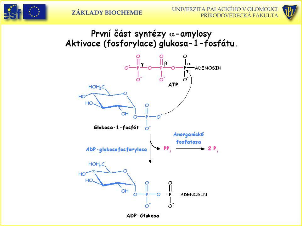 První část syntézy a-amylosy Aktivace (fosforylace) glukosa-1-fosfátu.