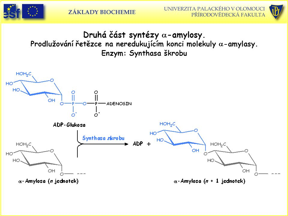 Druhá část syntézy a-amylosy