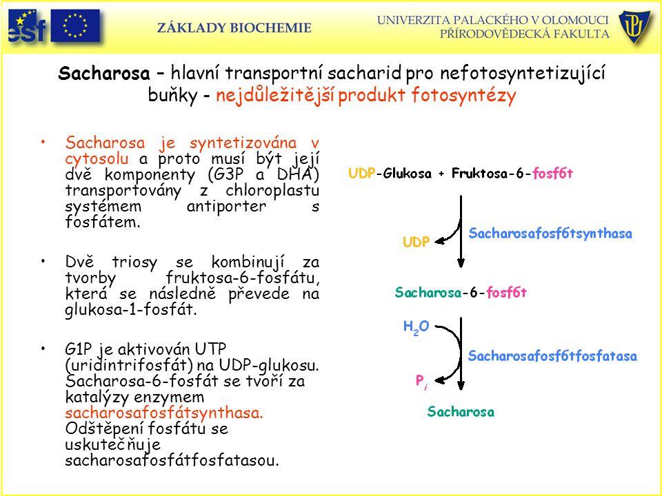 Sacharosa – hlavní transportní sacharid pro nefotosyntetizující buňky - nejdůležitější produkt fotosyntézy