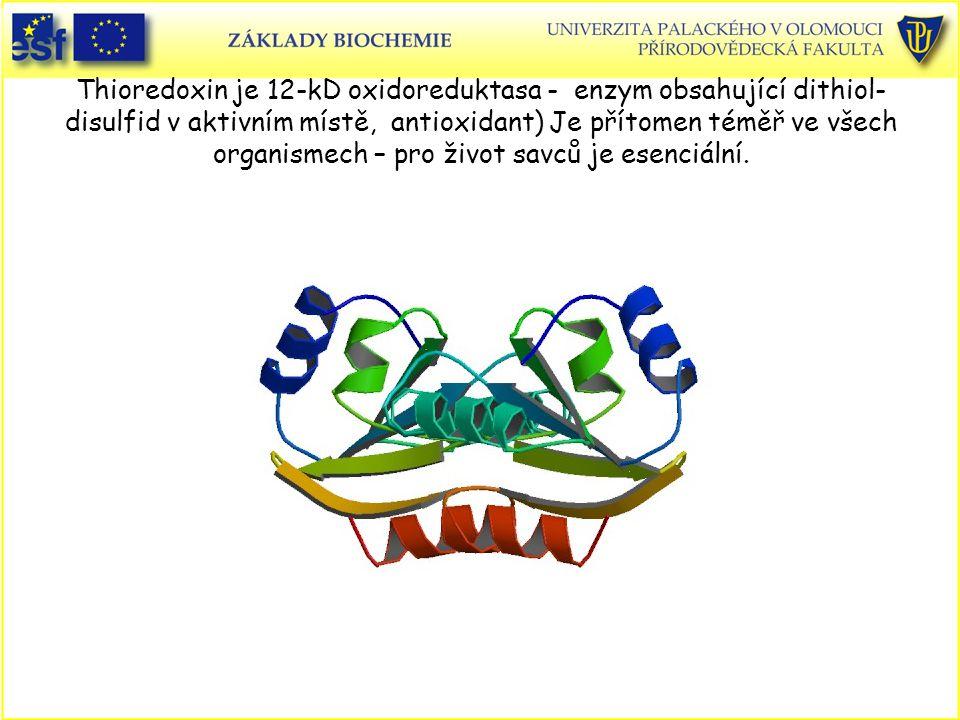 Thioredoxin je 12-kD oxidoreduktasa - enzym obsahující dithiol-disulfid v aktivním místě, antioxidant) Je přítomen téměř ve všech organismech – pro život savců je esenciální.