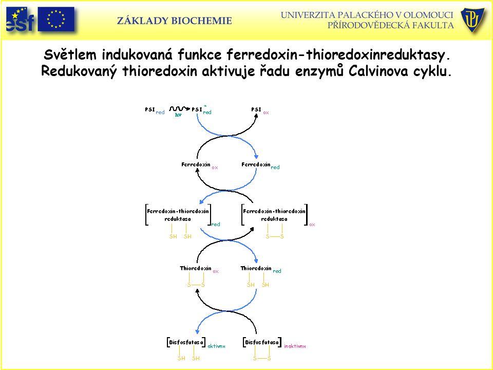 Světlem indukovaná funkce ferredoxin-thioredoxinreduktasy