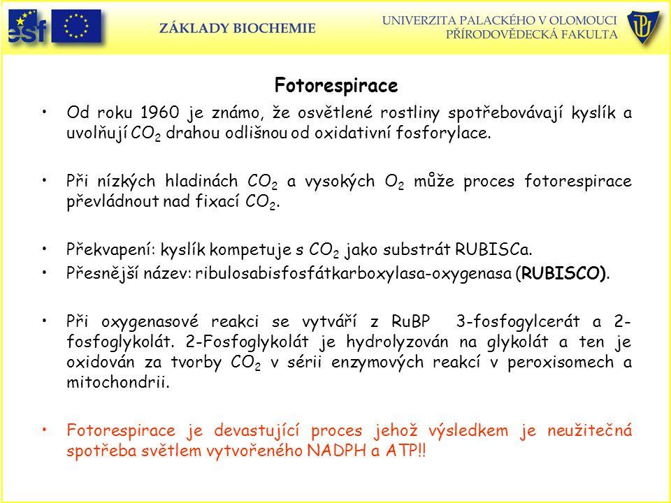 Fotorespirace Od roku 1960 je známo, že osvětlené rostliny spotřebovávají kyslík a uvolňují CO2 drahou odlišnou od oxidativní fosforylace.