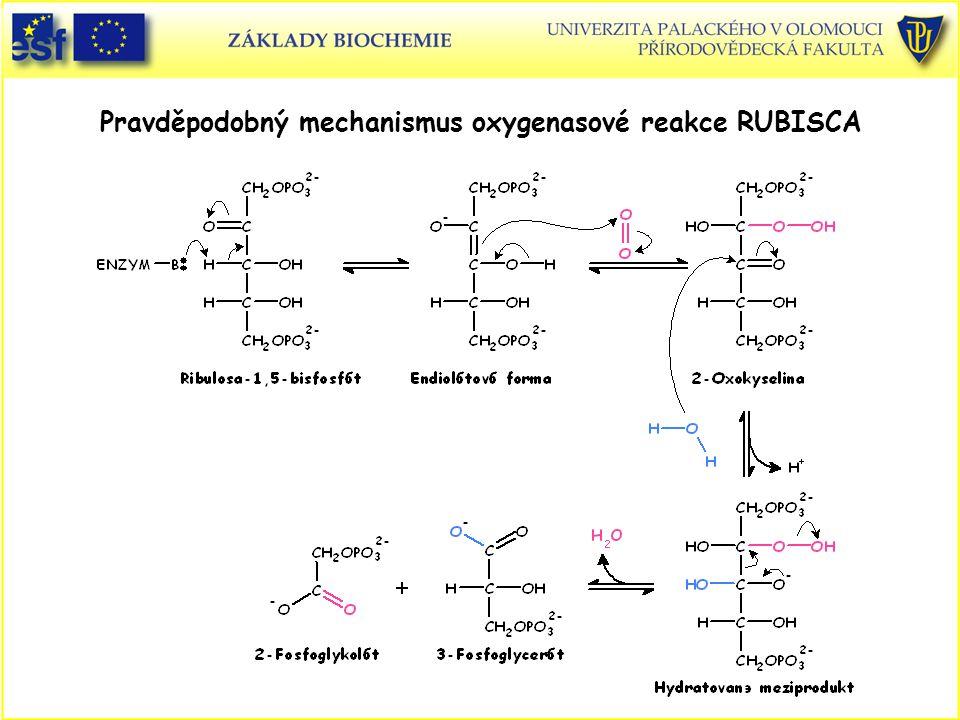 Pravděpodobný mechanismus oxygenasové reakce RUBISCA