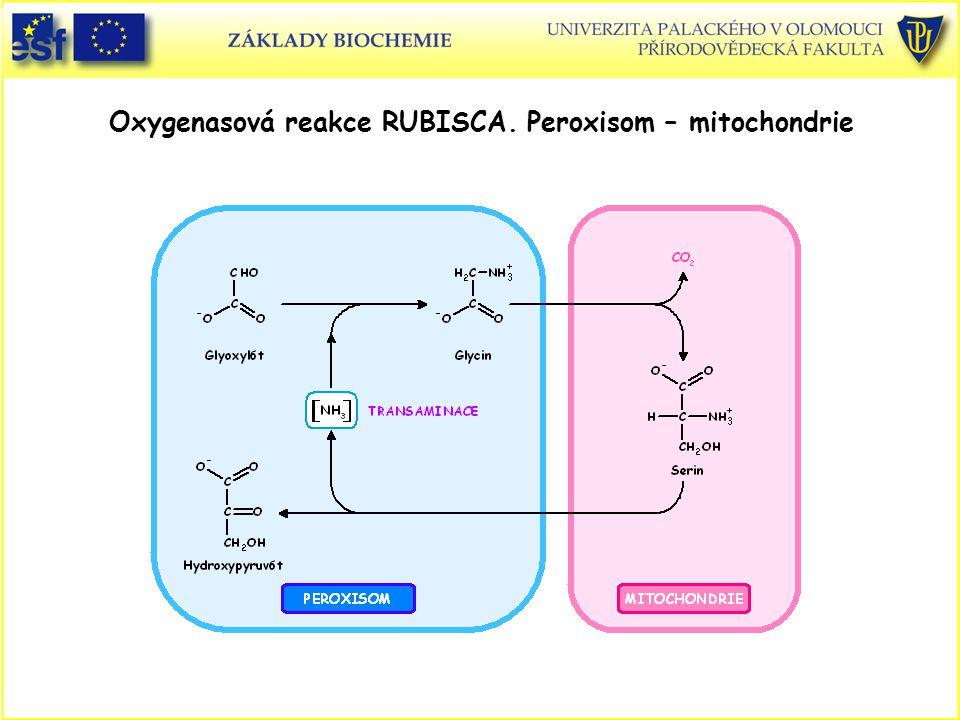 Oxygenasová reakce RUBISCA. Peroxisom – mitochondrie