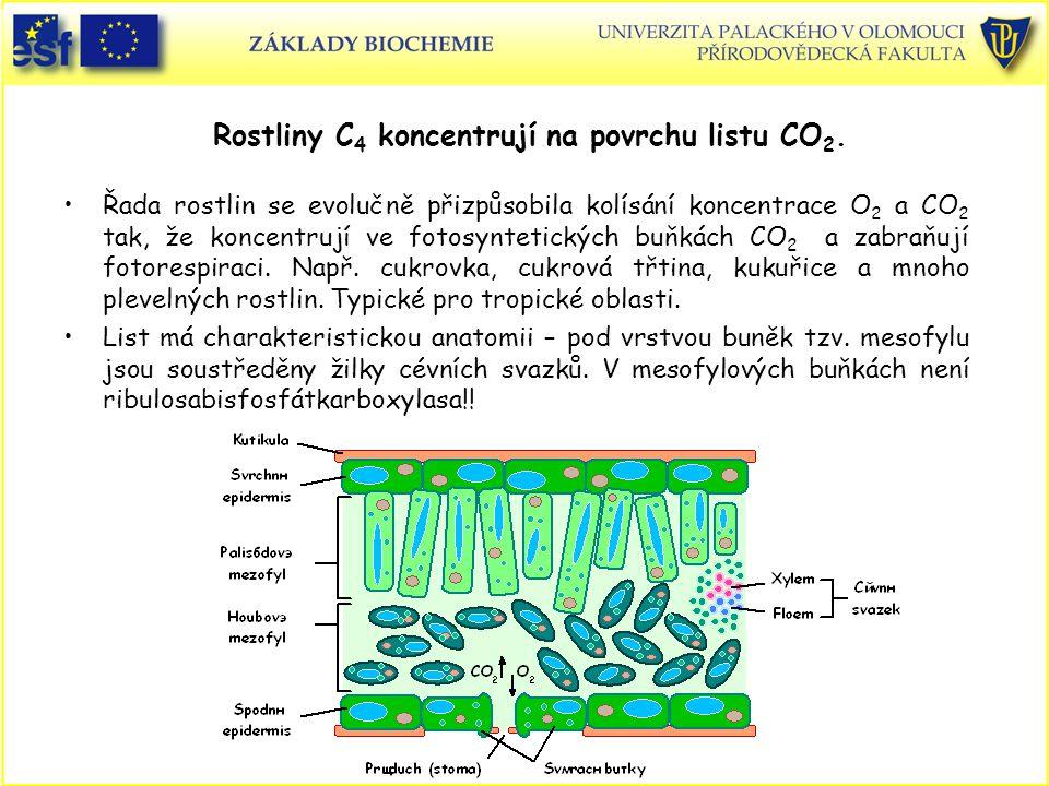Rostliny C4 koncentrují na povrchu listu CO2.