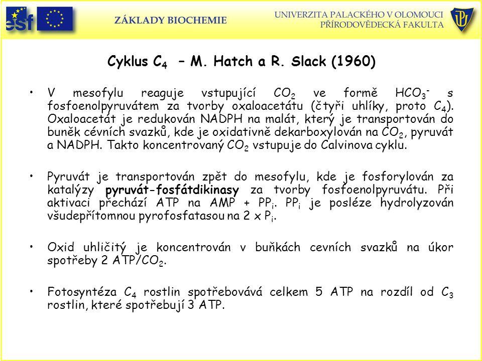 Cyklus C4 – M. Hatch a R. Slack (1960)