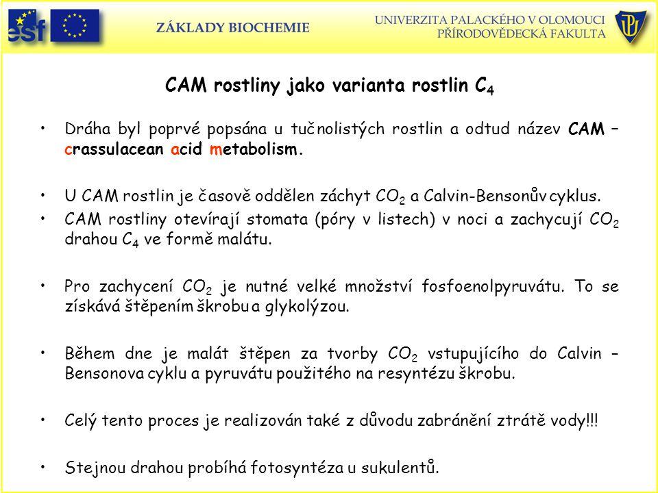 CAM rostliny jako varianta rostlin C4