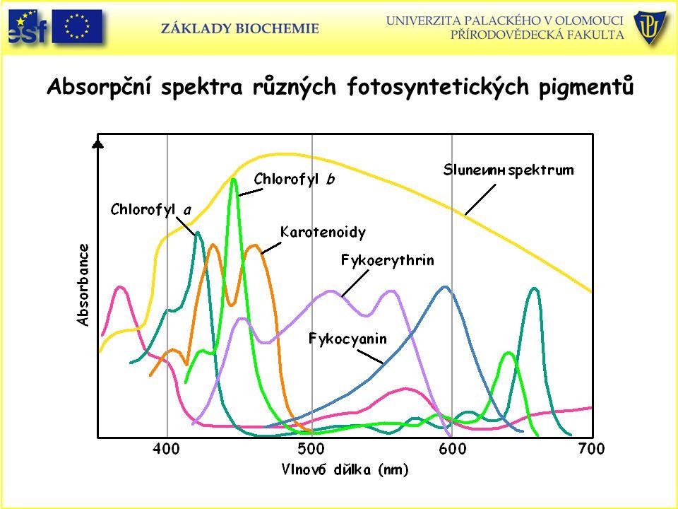 Absorpční spektra různých fotosyntetických pigmentů
