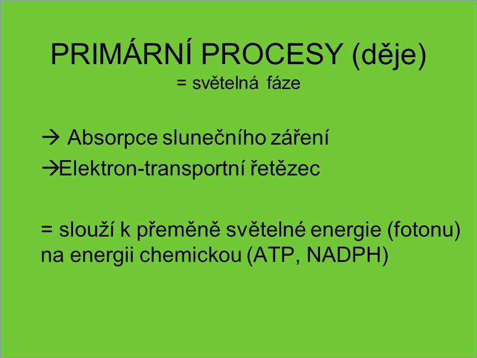 PRIMÁRNÍ PROCESY (děje) = světelná fáze