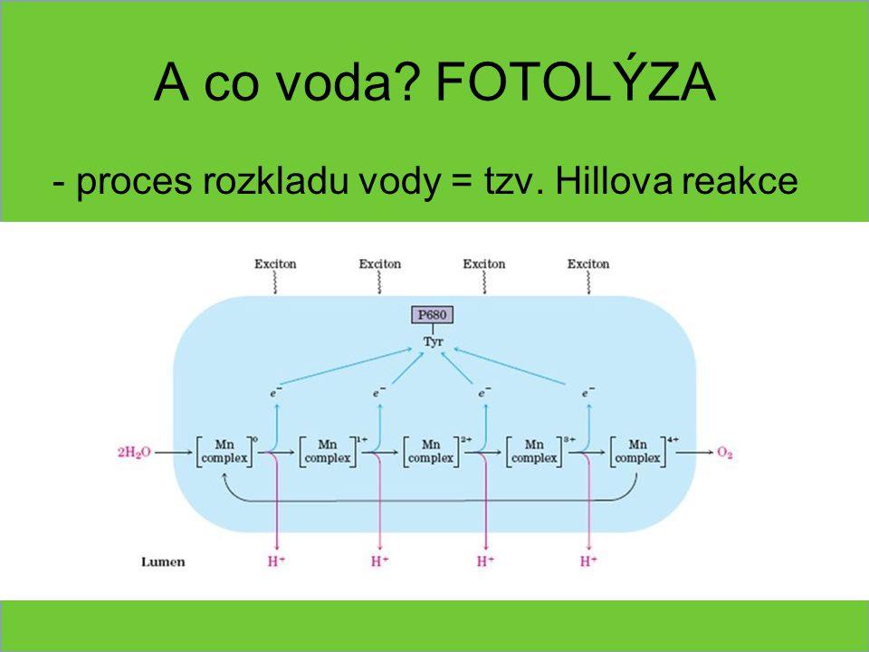 A co voda FOTOLÝZA - proces rozkladu vody = tzv. Hillova reakce