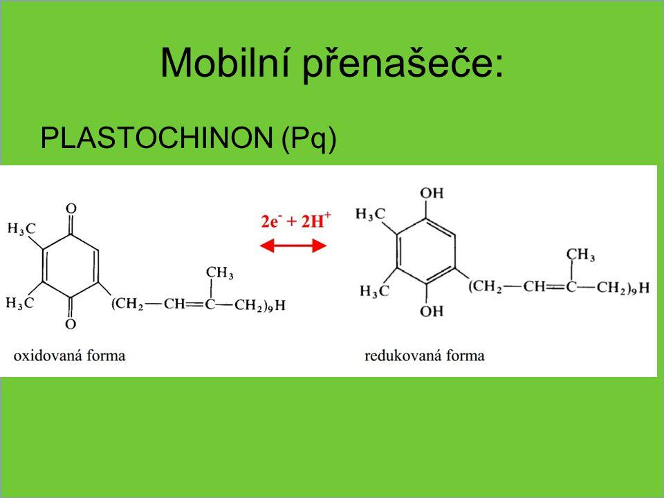 Mobilní přenašeče: PLASTOCHINON (Pq)
