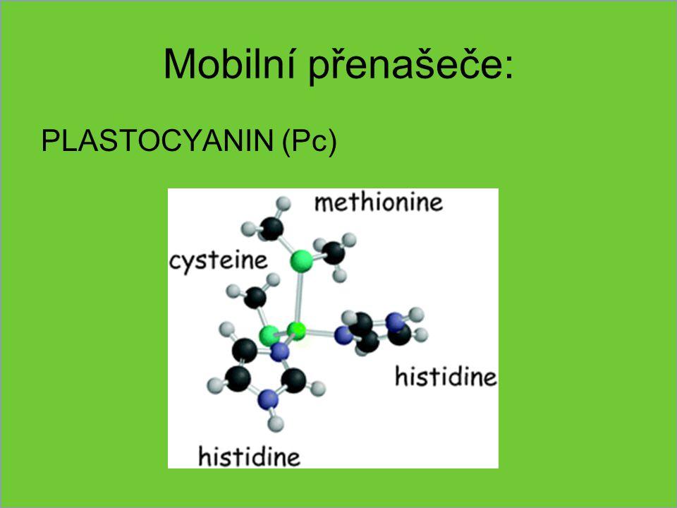 Mobilní přenašeče: PLASTOCYANIN (Pc)