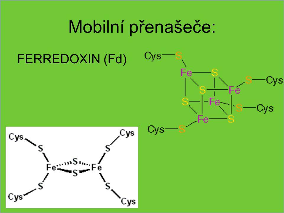 Mobilní přenašeče: FERREDOXIN (Fd)
