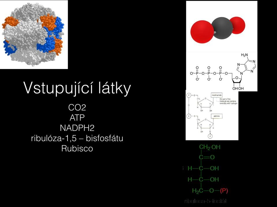 "Calvinův cyklus http://www.gvp.cz/~vondrackova/maturanti/Prezentace/Fotosynt%C3%A9za/  Prezentace ""sekundární procesy"