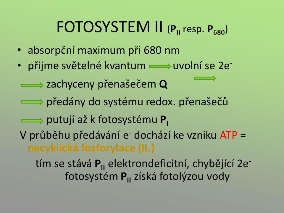 FOTOSYSTEM II (PII resp. P680)