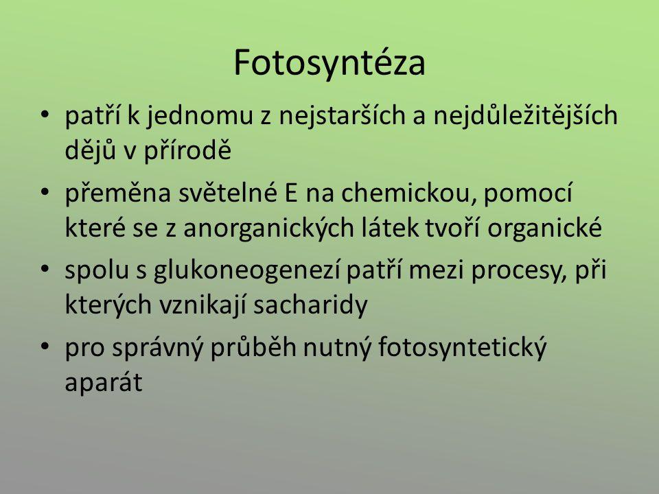 Fotosyntéza patří k jednomu z nejstarších a nejdůležitějších dějů v přírodě.