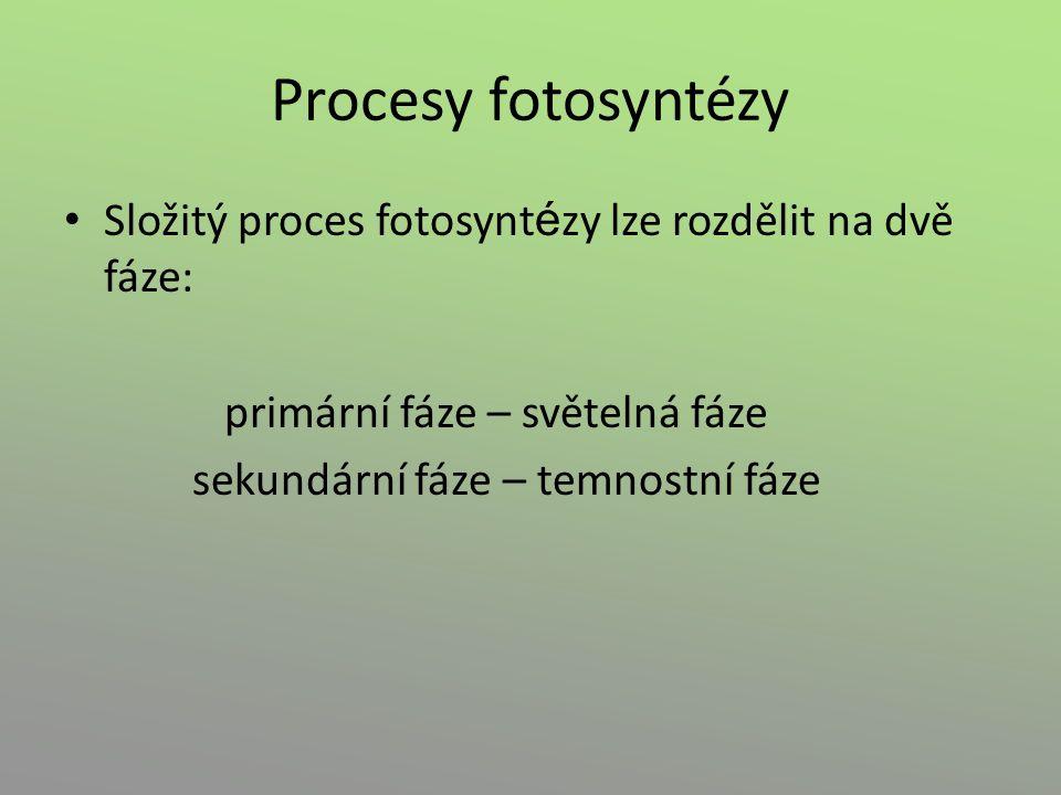 Procesy fotosyntézy Složitý proces fotosyntézy lze rozdělit na dvě fáze: primární fáze – světelná fáze.