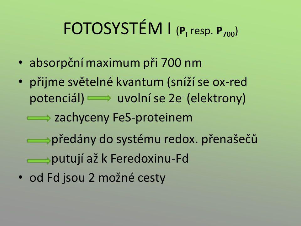FOTOSYSTÉM I (PI resp. P700)