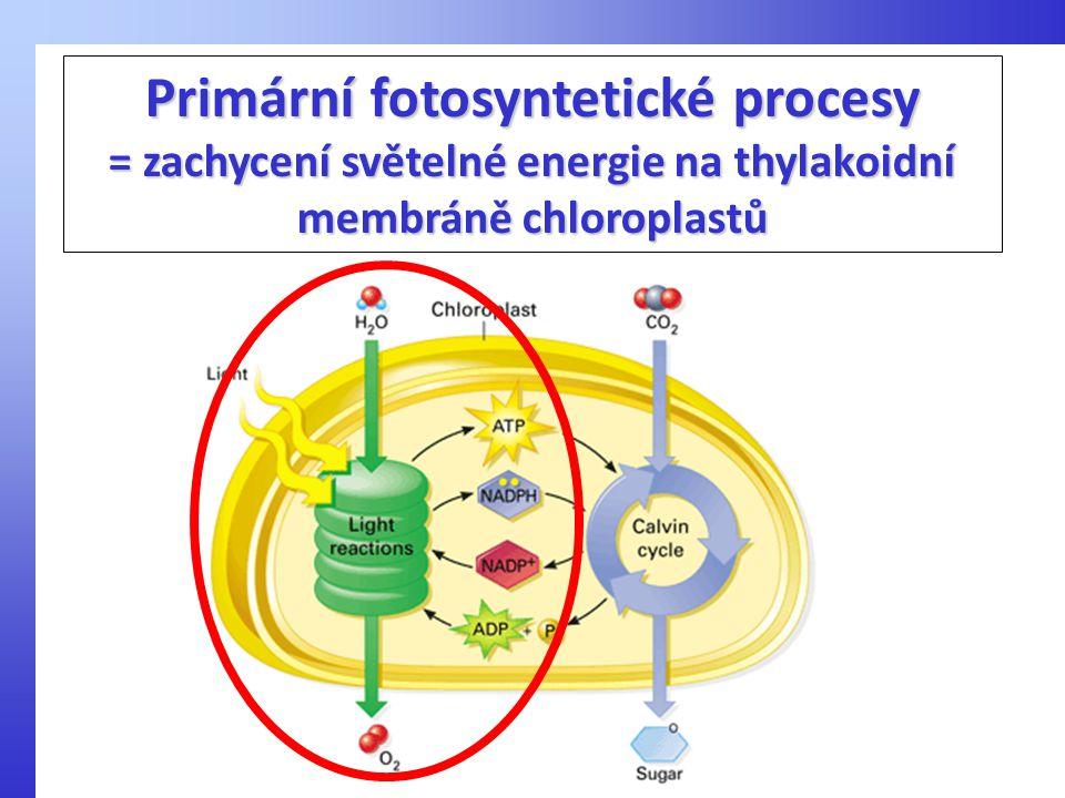 Primární fotosyntetické procesy