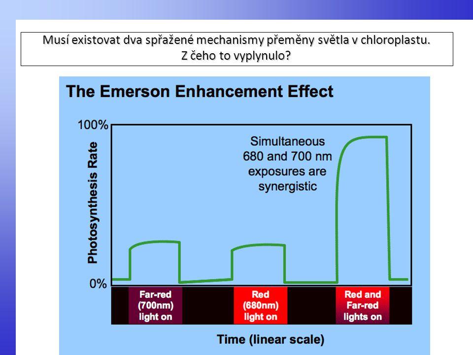Musí existovat dva spřažené mechanismy přeměny světla v chloroplastu.
