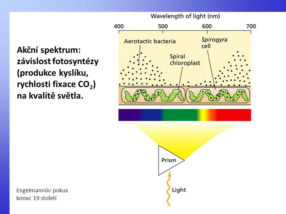 závislost fotosyntézy (produkce kyslíku, rychlosti fixace CO2)
